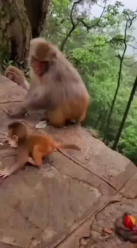 Mother's love🧡💛💚💙💜♥️🖤❤️💞💞💞💞💞 . . . . . #mother love #nature9k #nature #viral #reelsviral  6 w #trending